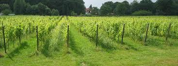wageningen wijngaard